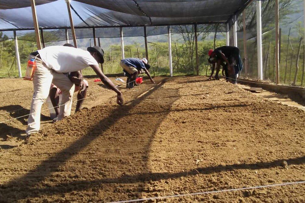 Moringa project van Stichting HomePlan in Haïti